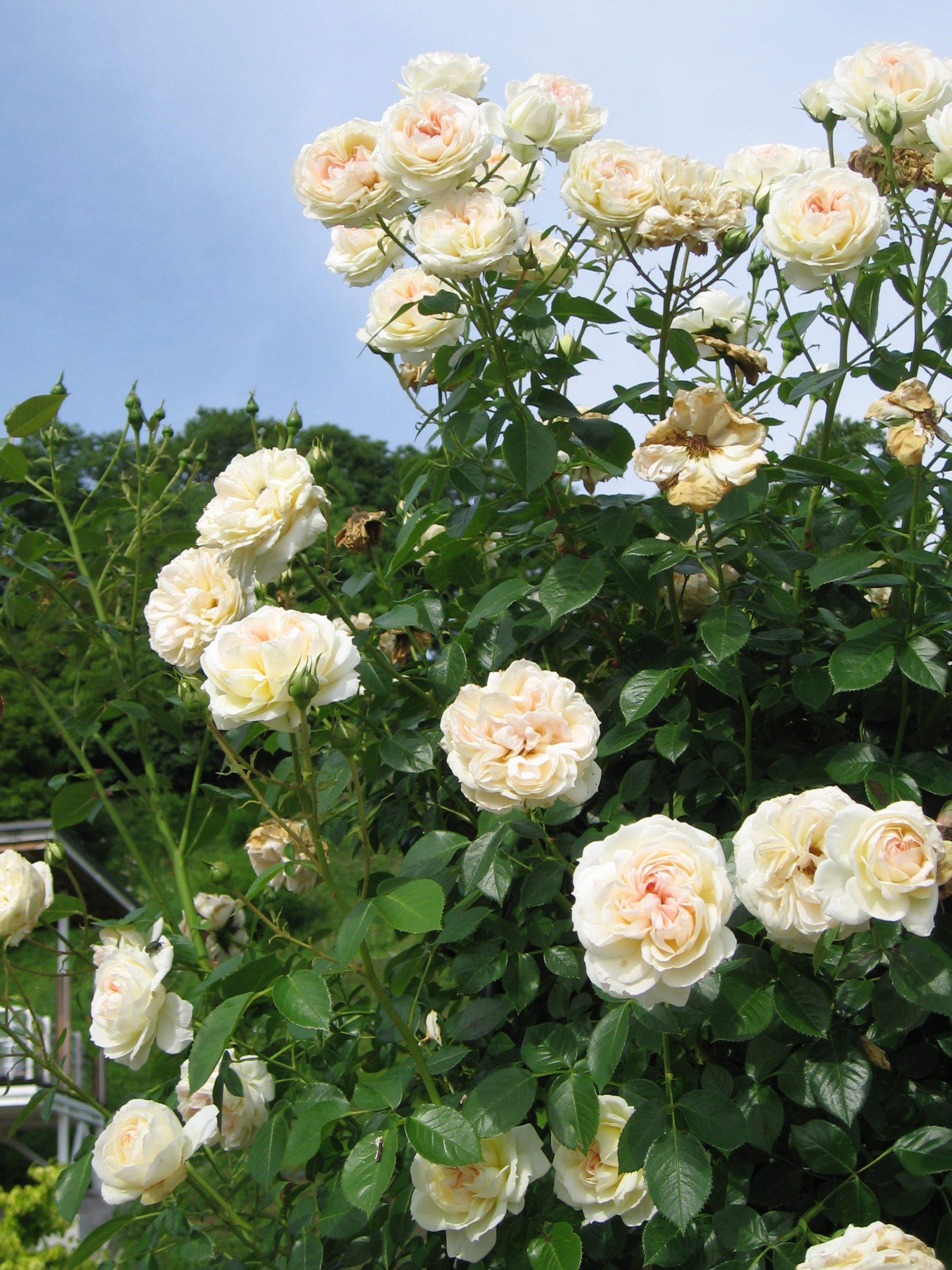 mon jardin ma maison