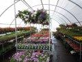 magasin de plantes en ligne